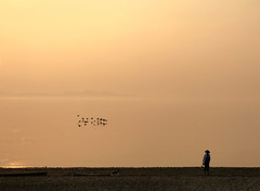 (Natalia Medd) Tags: morning sunrise geese flying reflection summer woman dog beach seaside sea ocean orange serenity landscape sky color