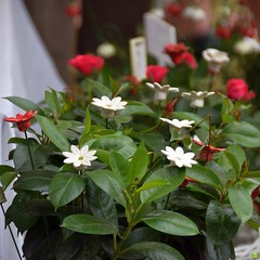 All-year flowers (petrOlly) Tags: europe europa germany deutschland toepfermarkt pottery rheydt schlossrheydt schloss moenchengladbach handmade object objects flower flowers decoration