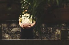gestante dani e oswaldo WEB 0109 (deiasinatora) Tags: amiga amizade amor arlivre baby bebê boehringer brasil brother casa casal children corporativo couple criança dad daddy dani danimendonça deia deiasinatora deiasinatoracombr family família father flores foto fotografia fotografias gestante grávida house irmã irmão irmãos irmãs jardimbotanico kid life love mamãe manuela menina menino mom mommy mother mãe natureza oswaldo pai papai photo photography pregnancy pregnant sinatora sister sp sãopaulo tie união vida