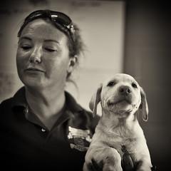 ... I think I'm being mocked (Boomingecho) Tags: animal animalshelter canine dog pup puppy adopt dontshop unwanted littledoglaughednoiret
