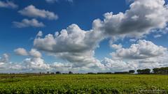 A Cloud like a Monster (BraCom (Bram)) Tags: bracom sky cloud wolk akker field trees bomen landscape landschap polder dirksland goereeoverflakkee zuidholland nederland southholland netherlands holland 169 widescreen bramvanbroekhoven nl