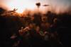 love (Philipp Sarmiento) Tags: philipp sarmiento sigma canon color landscape regensburg ratisbona boy lifestyle primelens