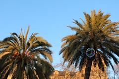 Bola de sabão (Marta_Teixeira) Tags: bola de sabao arvore palmeira
