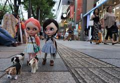 Kittens walking the dogs in Omotesando......