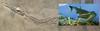 Machimosaurus (correia.nuno1) Tags: badenwuttemberg badenwürttemberg fetos fóssil stuttgart alemanha deutschland estratigrafia estugarda europa fósseis geologia geologiageral geology icnofósseis itália machimosaurus mesozoico naturkinde portugal somatofósseis