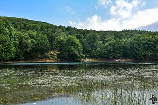 Le Lac Noir situé à 1200 mètres d'altitude dans la forêt d'Akfadou