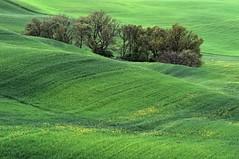 *Primavera* (albert.wirtz) Tags: rural tuscany toskana toscana italy italia italien frühling spring albertwirtz getreidefelder hügel hügelig grün green primavera valdorcia valley landscape natur natura nature getreide ländlich sanquiricodorcia verde greenscene abstraktenatur d700 nikon nikkor80400f4556vr