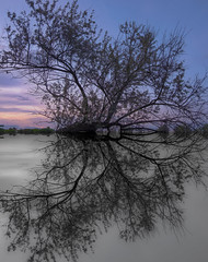 Heaven and Hell (Karma2c) Tags: tree water lake reflection mirror