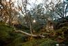 Au coeur de la forêt du Maido (LR Photographies) Tags: maido plainedestaramins maidoforet hautsdesaintpaul photopaysage photopaysageréunion iledelaréunion réunionpaysages forêtdeboisdecouleurs limon piqueniquemaido laréunion floredelaréunion