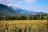 Golden grasses (Jessie T*) Tags: landscape blueriverbc canada mountains forest goldengrass fence cloudshadows cans2s