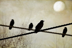 encrucijada (1crzqbn) Tags: fauna moon sliderssunday