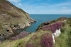 DSC09406 (www.atgof.co) Tags: llwybr arfordir mon anglesey coast path
