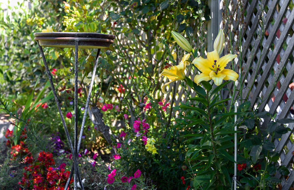 The world 39 s best photos of garden and newzealand flickr for Grow landscapes christchurch