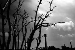 What will come (dockerm) Tags: what will come dark dunkel baum tree