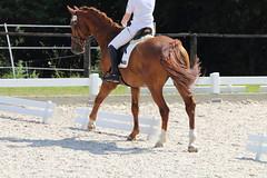 _MG_5661 (dreiwn) Tags: dressage dressurprüfung dressurreiten dressurpferd dressyr ridingarena reitturnier reiten reitverein reitsport ridingclub equestrian horse horseback horseriding horseshow pferdesport pferd pony pferde dressur dressuur tamronsp70200f28divcusd