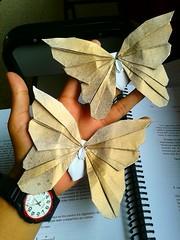 Origami Butterfly / Mariposa - Javier Vivanco (javier vivanco origami) Tags: butterfly mariposa origami javier vivanco ica peru