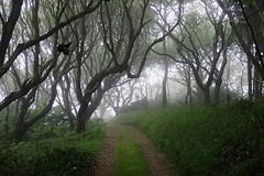 Magie !! (8pl) Tags: brouillard magie sark sercq nature forêt bois promenade verdure matin chemin path herbe greatphotographers