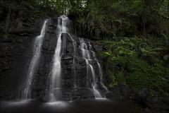 Rincones mágicos... (Jose Cantorna) Tags: rincón bosque helechos agua waterfall water seda nature landscape nikon d610 cascada