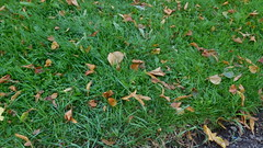 Goodbye Summer Hello Autumn (claire artistandpoet Stroke Survivor) Tags: autumn fall grass leaves