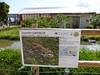 Terre de Singes, Lumigny-Nesles-Ormeaux  (77) (delphinecingal) Tags: terredesinges lumignyneslesormeaux tamarins