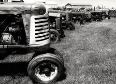 enjoying retirement...(Explored) (BillsExplorations) Tags: tractors vintage farm rust retirement old lineup farmmachinery internationalharvester farmall johndeere case restoration iowa monochrome blackandwhite monochromemonday machinery