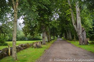 In Engelsholm woods (DSC_3548vk)