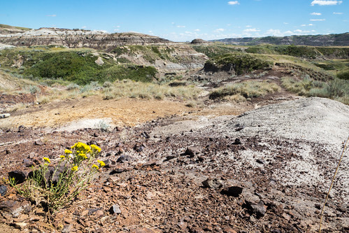 Flowers in the Badlands