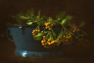 Berries and Colander