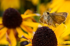 IMG_1020 friggen bug (starc283) Tags: starc283 nature naturesfinest canon canon7d flickr flicker macro outdoors outdoor