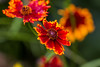 color attack (dr.larsbergmann) Tags: flowers flower thebeautyofnature natur nature eos canon greatphotographers naturemasterclass natureandnothingelse fantasticnature