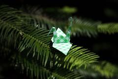 Paper Crane and Wollemia (Ichigo Miyama) Tags: ツルとウォレミア papercrane wollemia origami おりがみ ツル 折り紙 折り鶴 paper ウォレミア flowerorigami flower 花