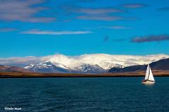 Le voilier (didier95) Tags: voilier reykjavik islande mer bleu blanc montagne paysage ciel nuage bateau