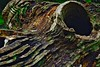 Was guckst du? What do you see? (cammino5) Tags: baumstamm einsiedeln gramschatzerwald rimpar gramschatz august 2017 pareidolie