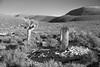 Old Delamar Cemetery (joeqc) Tags: nevada nv lincolncounty lincoln county ef2470f28l canon 6d greytones black bw blancoynegro blackandwhite white monochrome mono delamar cemetery