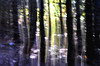 Alistair John Borland (AlistairJBorland) Tags: blurry forestimpressions magicforest printedimages fairies forest panning ethereal woods magic fantasy light colour landscape trees leaves