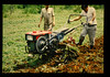 Field Perfomance Test For Prototype Hand Tractor  = 試作歩行型トラクタの歩行試験 (JIRCAS) Tags: 適正農業機械技術開発センター計画 インドネシア 適正センター圃場 農業機械 fieldperformancetest prototype handtractor cdaet indonesia