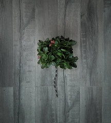 THREE (oroyplata.) Tags: three minimalism conceptual fine art planta maceta arbol minimalismo concept valencia crestive edition photographer dream surreal irreal ps rafamacias oroyplata