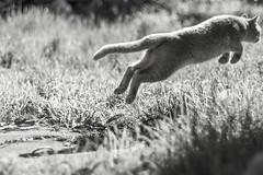 Rusy (Alvimann) Tags: nature naturaleza natural natura grass pasto alvimann mascota pet gato gata animal domestic domesticado domesticated domestico garden jarding male hombre
