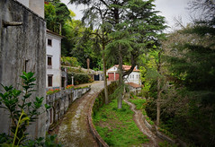 Idyllic Woodland Walk (Jocelyn777) Tags: woods trees nature landscape greenery green villages towns sintra portugal travel textured