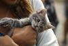 IMG_2655 (kz1000ps) Tags: boston massachusetts bostoncommon common park cats kitties kittens felines caturday purr catcafe brighton humane society adoptions