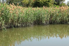 Grass Reflection (superzookeeper) Tags: reflection water river canoneos5dmarkiv ef2470mmf28liiusm 5dmk4 5dmkiv hk hongkong namsangwai eos field green grass yuenlong digital landscape