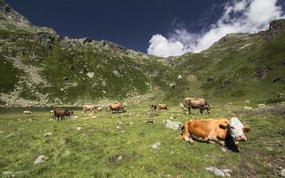 Alpe Pianboglio - Parco Naturale Alpe Devero (Italy)