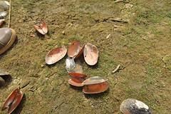IMG_6033 (JoStof) Tags: clams tandjari barrage est burkinafaso bfa fadangourma