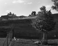 Keystone, Sd 8/2017 (kylemorrisseyphoto) Tags: pentax67 pentax mediumformat 120 6x7 bw film illford delta100 southdakota sd keystone 2017 articwolfcubs curiouscub dinner