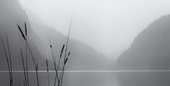 Lake Louise (marianna_a.) Tags: p1050423 lake louise alberta landscape mariannaarmata grasses mountains water canada fog smoke haze mono soft