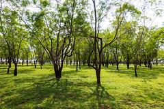 Bengalaru Countryside (Mark Griffith) Tags: amazon amazoncom bangalore india sonyrx100v worktrip bengaluru countryside ournativevillage offsite