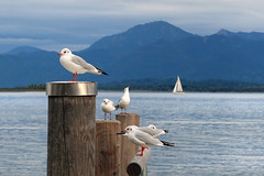 Cloudy day on the Chiemsee (rotraud_71) Tags: bavaria chiemsee water mountains sky clouds gulls prien ruby3