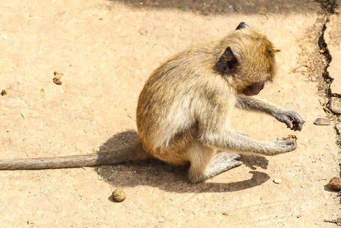 Wat Khao Takiap - Monkeys