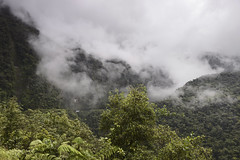 Driving through the jungle (Joost10000) Tags: mist forest rain rainforest landscape jungle landschaft road yungas deathroad traffic clouds scenic beauty epic bilvia bolivia southamerica andes mountains coroico