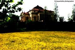PALLADIO (Ecinquantotto ( + 1.500.000 views !!! GRAZIE) Tags: architettura architecture art arte colori colors d3000 dreams estate fiori flowers italia italy nikon nikond3000 ombre yellow giallo veneto palladio campagna